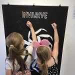 Whitstable Seaside Guide Invasive Kids